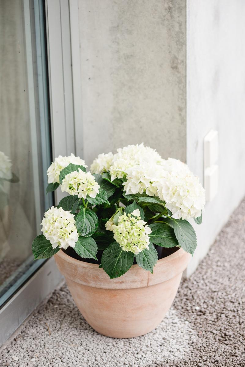 Fotostudio Open Door Nina Wüthrich Photography 42